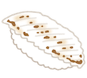 :sushi_aburi_engawa: